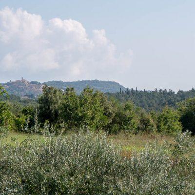 Valicandolina-1140064